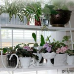 Как комнатные растения влияют на здоровье и психику?