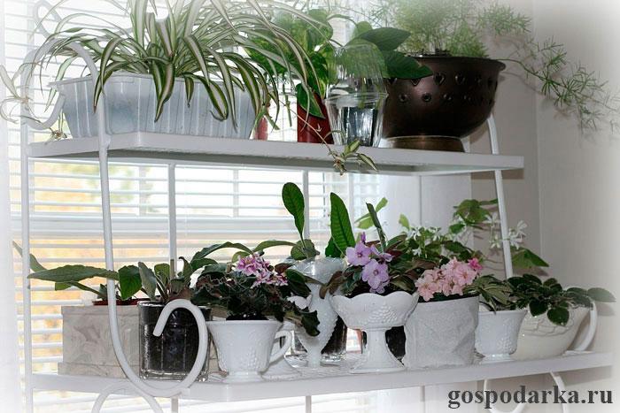 полезные-комнатные-растения