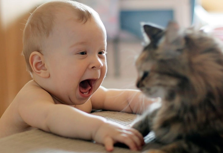 малыш-и-кошка