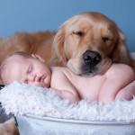 Новорожденный и домашние животные, стоит ли рисковать?