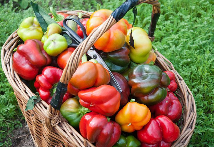 как-выращивать-вкусные-перцы