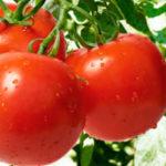 5 овощей, которые можно выращивать со своими детьми