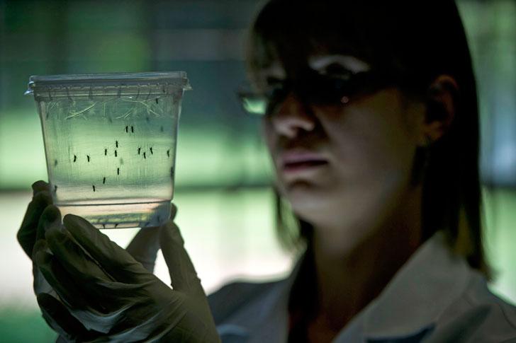 ученые-исследуют-вирус-Зика