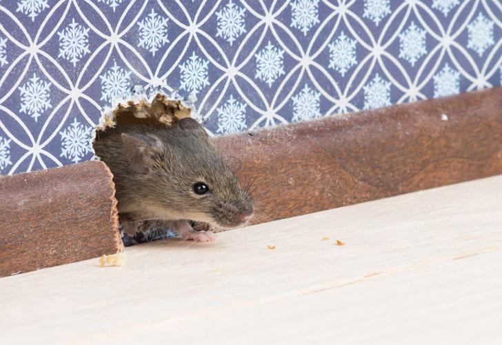мышь-в-доме