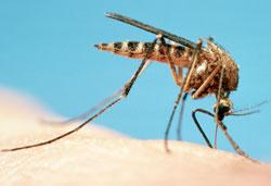 Лучшее средство от комаров, которое не продается