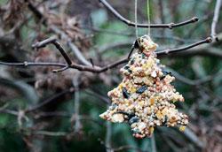 Как сделать рождественские украшения из корма для птиц?