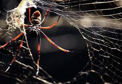 Как избавиться от пауков в доме: проверенные способы