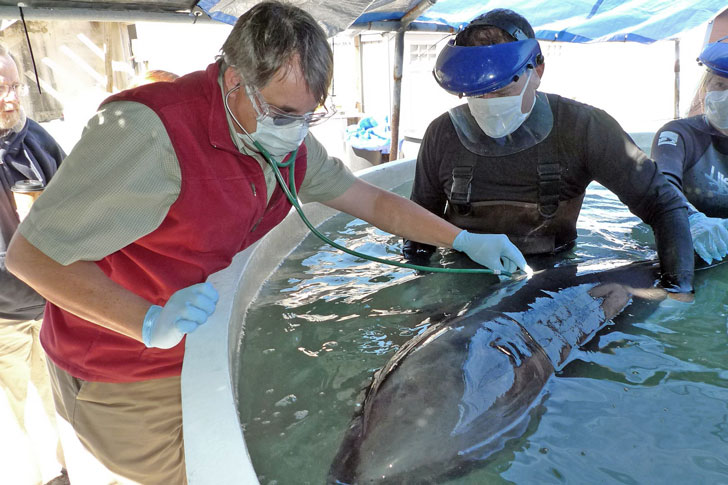 лечение дельфина