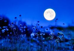 Посадка овощей по лунному циклу