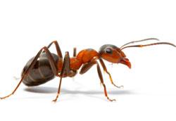 Как избавиться от насекомых в доме?