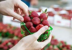 Фрукты и овощи с самым высоким содержанием нитратов